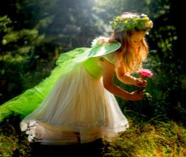 Wholesale Fairy & Garden