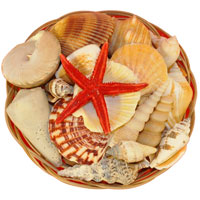 Shell Basket 6 Inch
